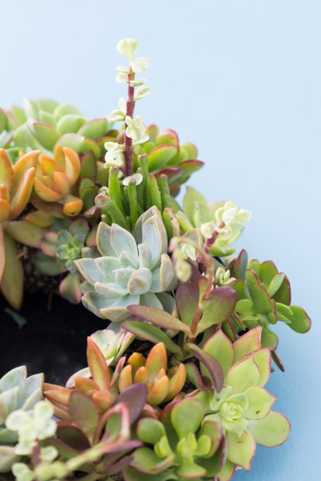 succulent centerpiece for wedding party gift