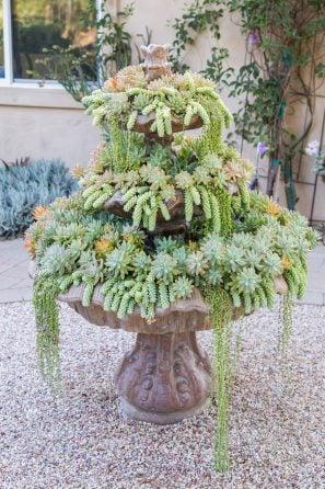 succulent filled fountain