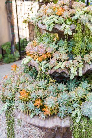 succulent fountain sedums