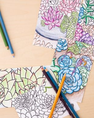 succulent gifts coloring