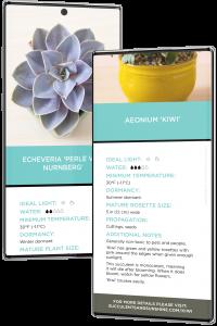 perle von nurnberg aeonium kiwi succulent identification cards on phone