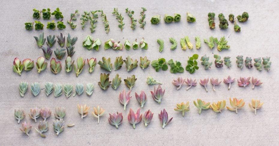 succulent leaves propagation selling succulents