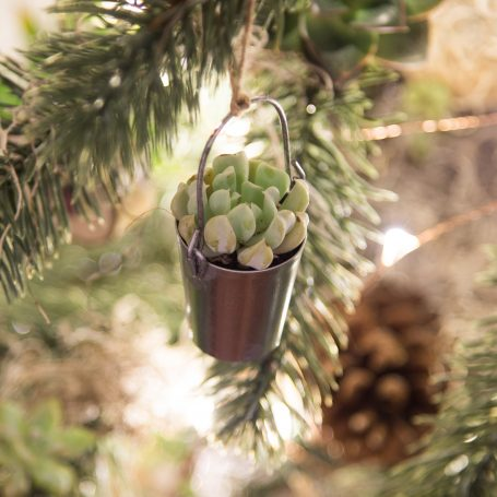 hang succulents on your christmas tree as ornaments