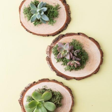 succulent party favor wood