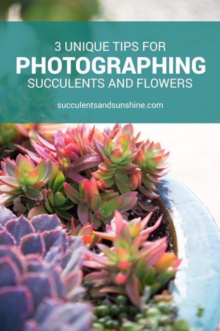 succulent photos flowers tips
