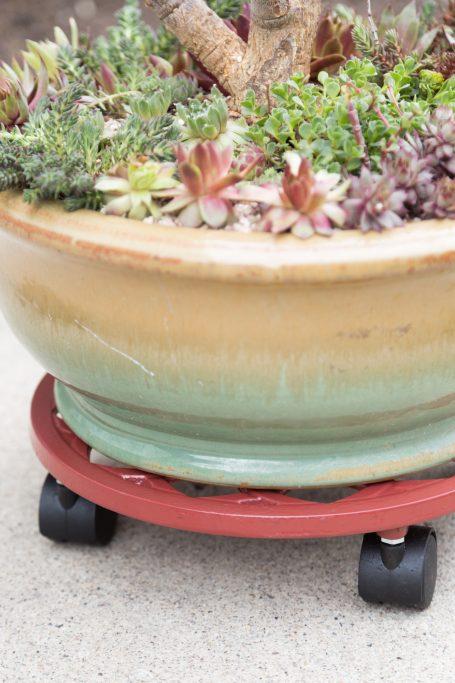 succulent planter trolley