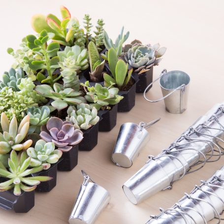 tiny pails with succulent plugs