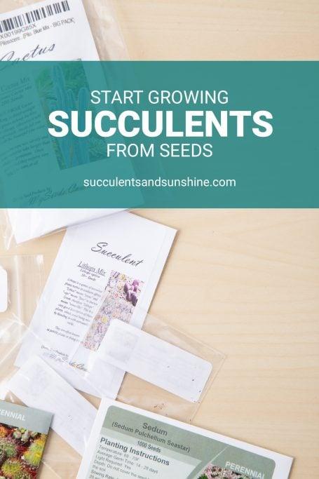 succulent seeds tutorial
