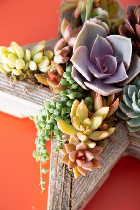 succulent star planter sell succulent arrangements