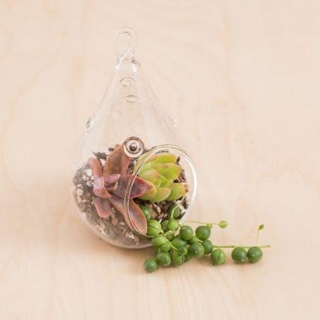 succulent terrarium colorful