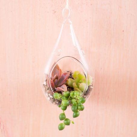 graptoveria sedum string of pearls senecio succulent terrarium