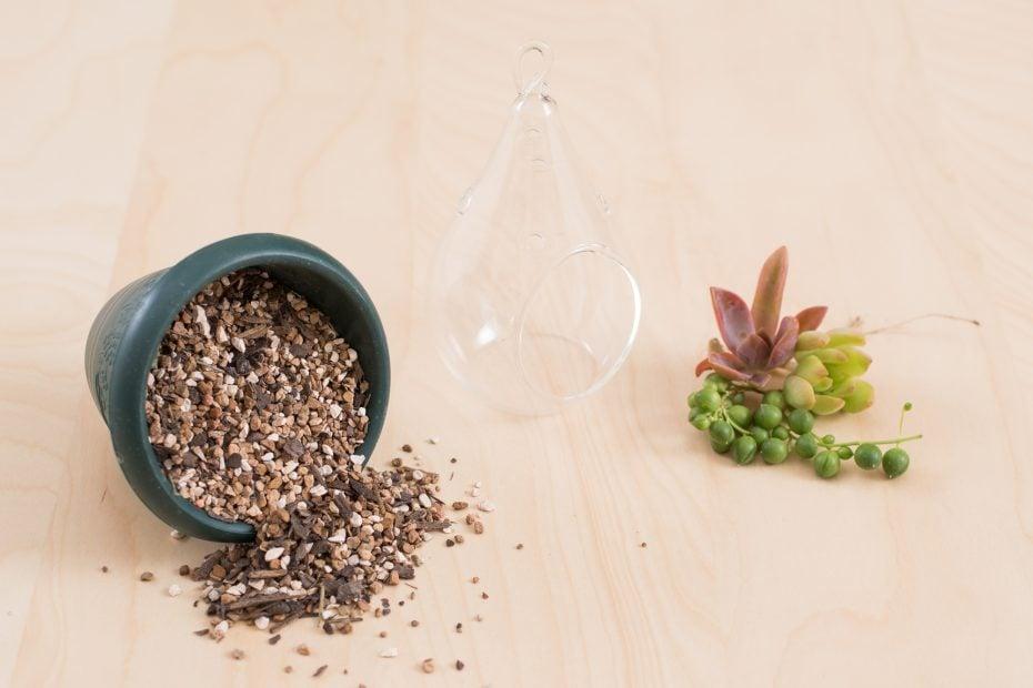 succulent terrarium supplies