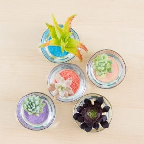 colorful succulent cuttings in colored sand