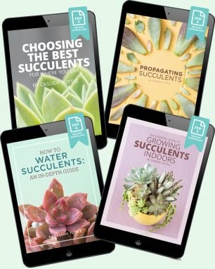succulents and sunshine ebooks