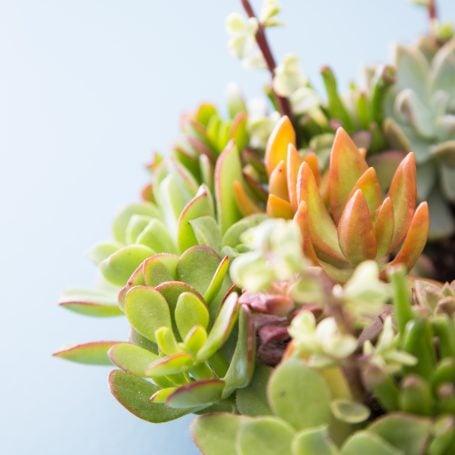 succulents arrangement for sale