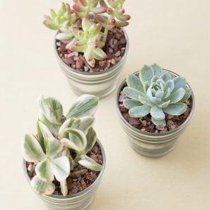 succulents glass votive party favor