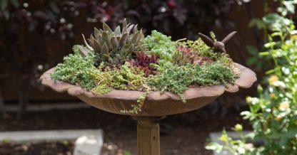 bird bath filled with sedums sempervivums succulents planter