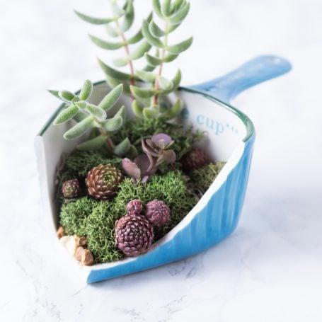 succulents in broken measuring cup