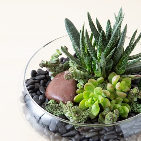 green red orange succulent shallow glass dish container black rock