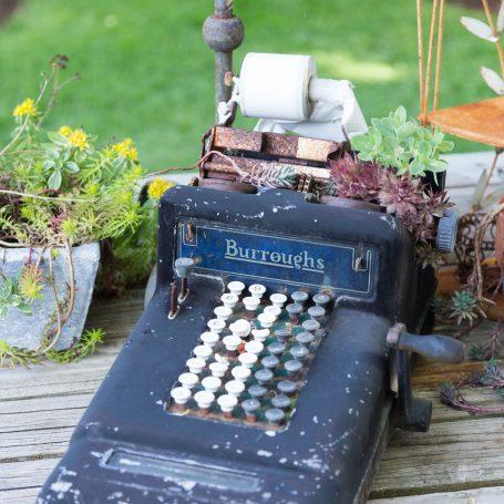 succulents in typewriter
