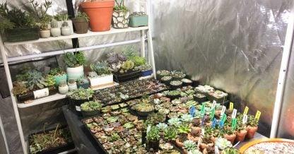 succulents inside grow tent