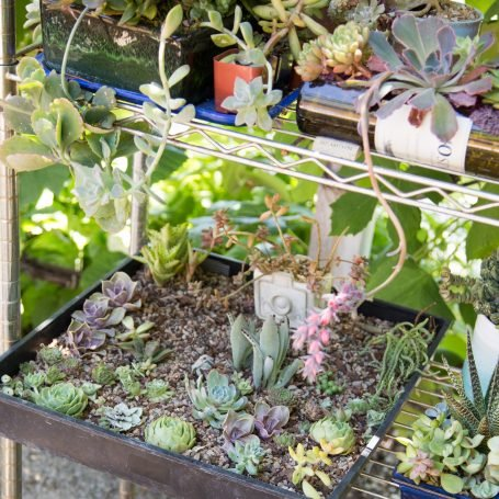 succulents planted well draining soil metal shelf