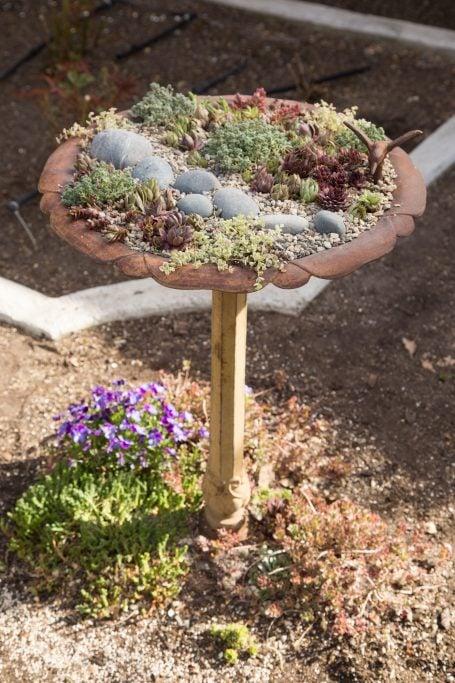 bird bath planter sempervivums sedums cold hardy