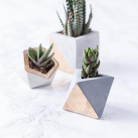 succulents small concrete pots