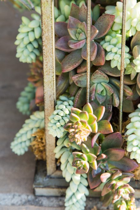 succulents spilling out of birdcage