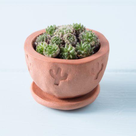 succulents tiny terra cotta pot