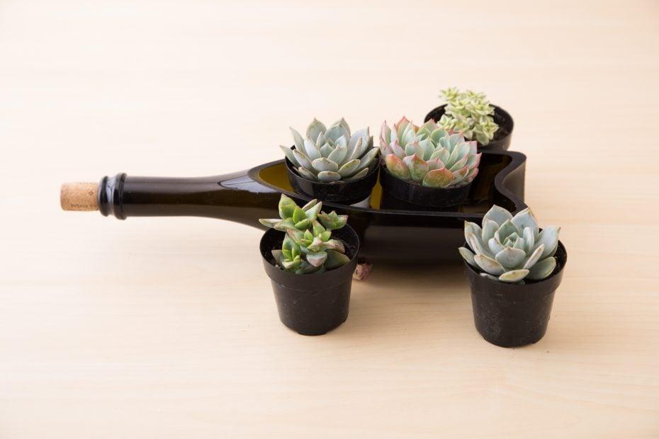 succulents wine bottle