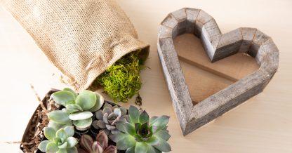tools kit diy succulent planter tutorial gifts