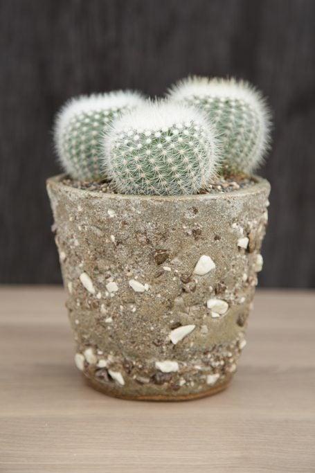notocactus ceramic pot susan aach planter hand made succulents