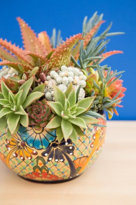 talavera pottery brightly colored succulent arrangement echeverias aloes senecios red orage blue green white