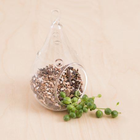 terrarium hanging succulent