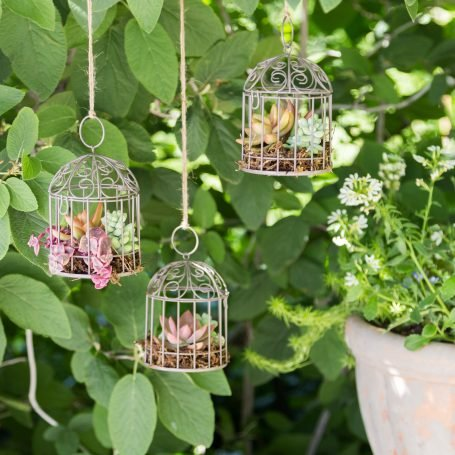 there succulent bird cage gardens