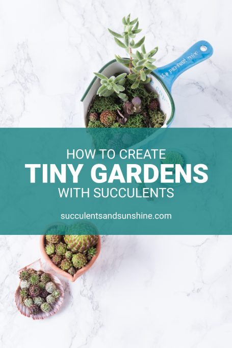 tiny succulent garden tutorial