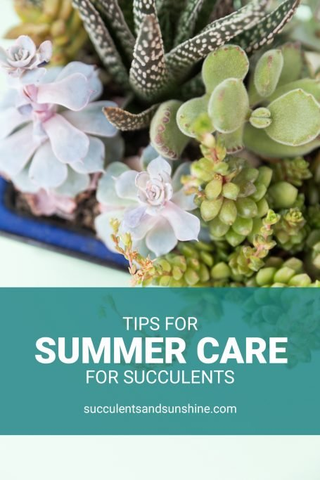 tips for keeping succulents happy in summer