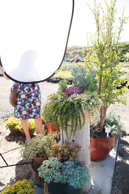 tips succulent photography