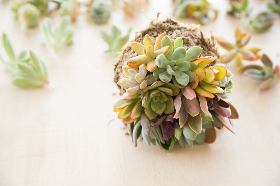 topiary ball with succulents