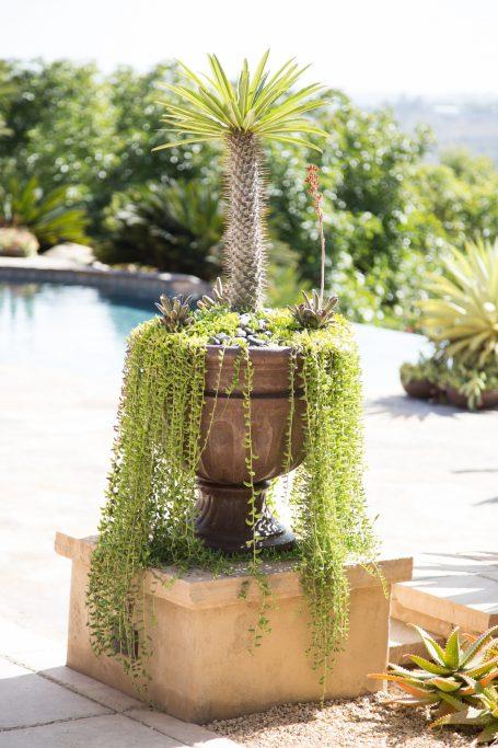 trailing succulents large planter