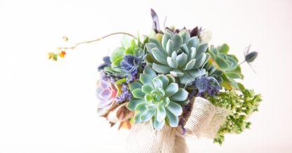 succulent bouquet flowers wedding save cuttings potted arrangement echeveria purple pink blue