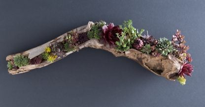 how to fill driftwood with succulents diy tutorial