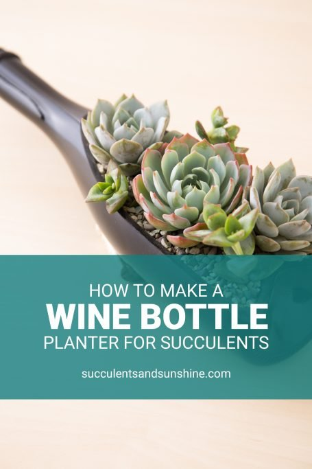 tutorial wine bottle succulent planter