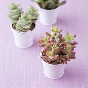 white pail wedding favor succulents