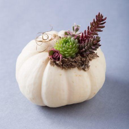 white pumpkin moss tiny succulents
