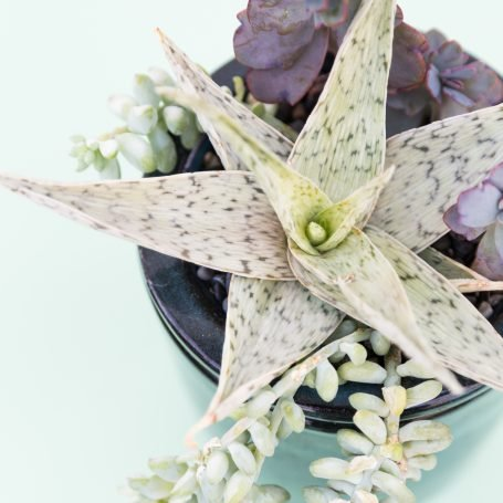 white purple succulent arrangement
