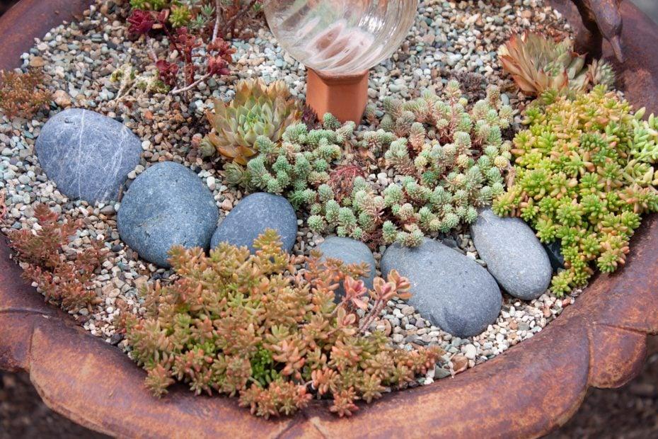 copper colors winter dormant succulents sedum sempervivum