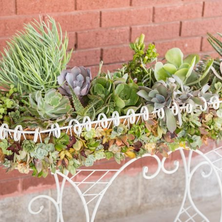 green purple soft succulents in white wire planter cuttings