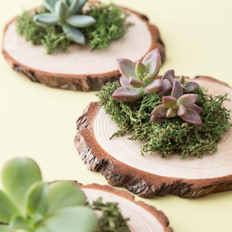 wood succulent party favor